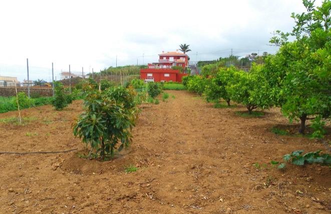 Großes Grundstück mit Anbaufläche