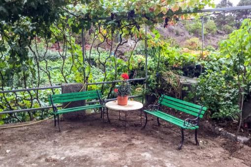 Idyllische Terrasse umgeben von Weinreben
