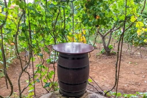 Charmanter Platz inmitten von Weinreben