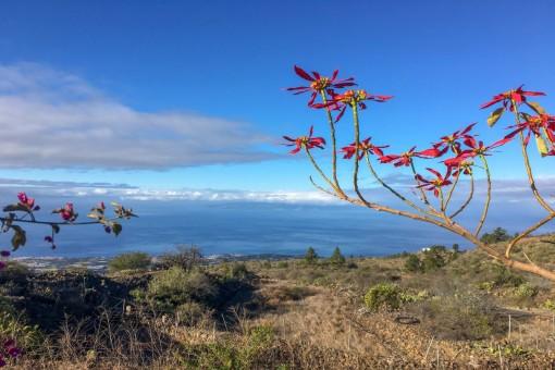 Schöne Finca mit Landschaftsblick und kleiner Hütte in Chío
