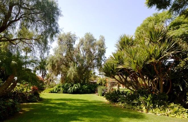 Stattliche Bäume und Rasenflächen im Park