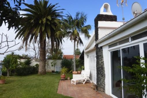 Die endemische, kanarische Palme