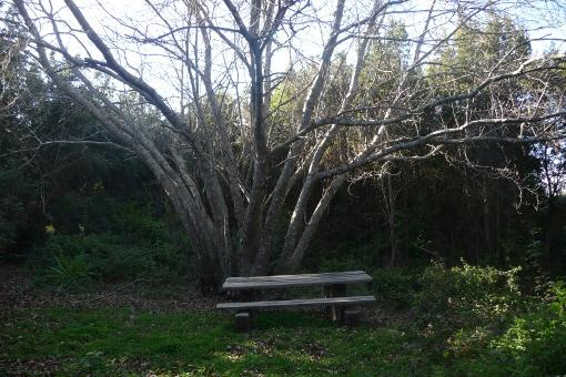 Romantische Essecke mitten im Wald