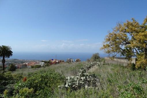 Günstige Gelegenheit: 8000 m2 Meerblickfinca mit zwei Baugrundstücken in La Victoria de Acentejo
