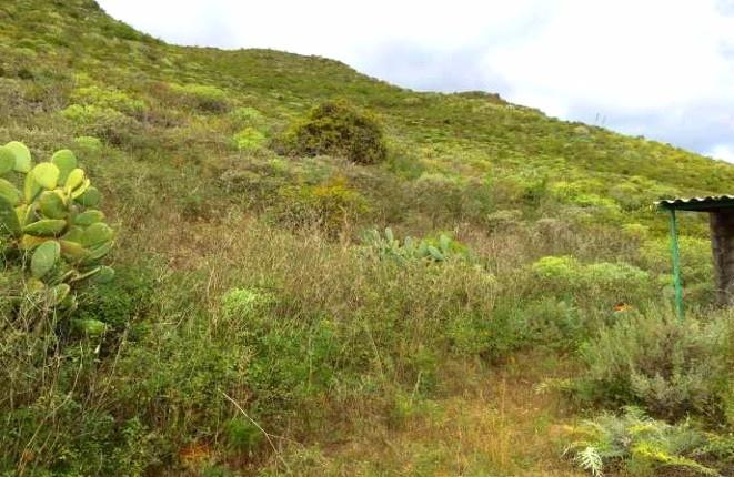 Ein Teil des Grundstücks