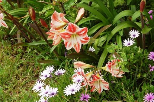 Schöne Pflanzenwelt